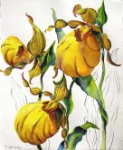 Elaine Tweedy - Woodland Treasurers - Lady Slippers (SOLD)