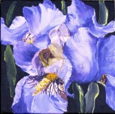 Elaine Tweedy - Iris (SOLD)