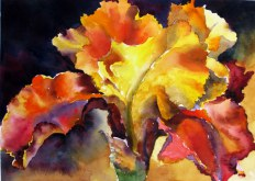 Elaine Tweedy - Gold & Red Orange Iris (SOLD)