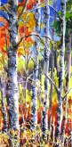 Elaine Tweedy - Sunlight though the Aspen